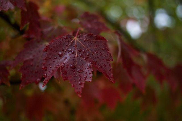 Stephen chose this one - the red wet leaf - which described all the photos today.