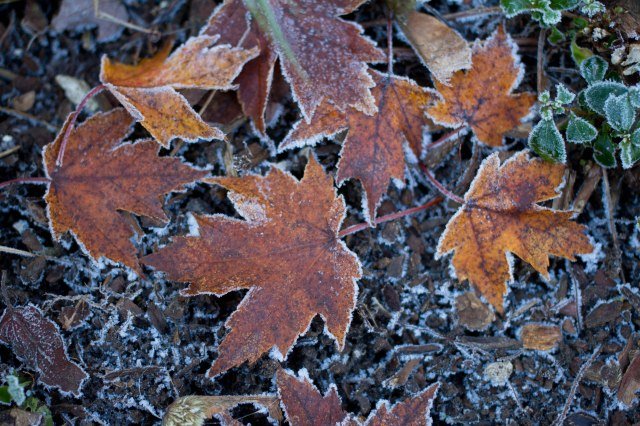 Frosty fall debris
