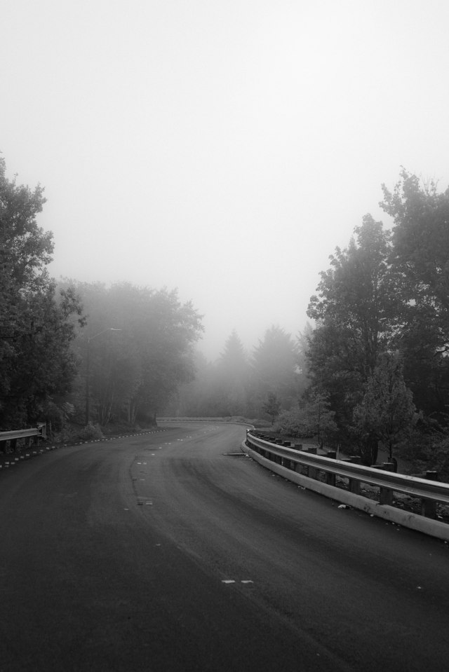 Day 65: Foggy roads